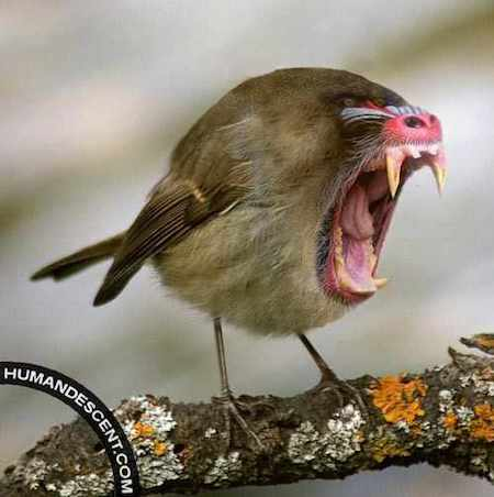 Bird with teeth