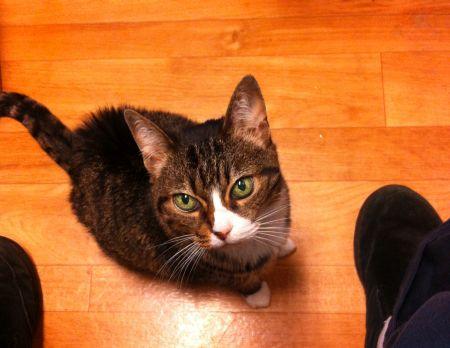 Annie Cat